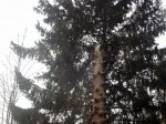 <strong>Baumfällung, wir zeigen vollen Einsatz.</strong>
